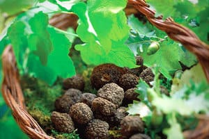 Truffle hunting in Umbria and Provence
