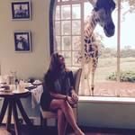 Return to Giraffe Manor in Kenya