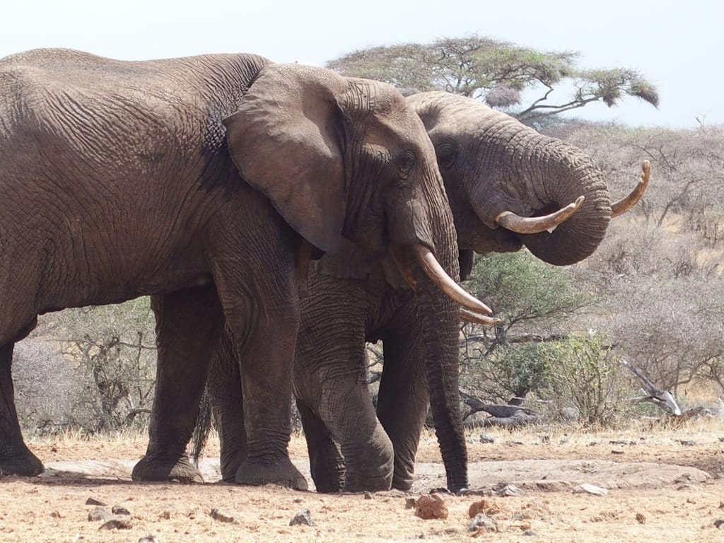 Ivory Only Belongs On Elephants