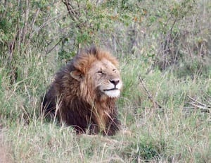 Just Checked Out: Angama Mara in the Maasai Mara, Kenya