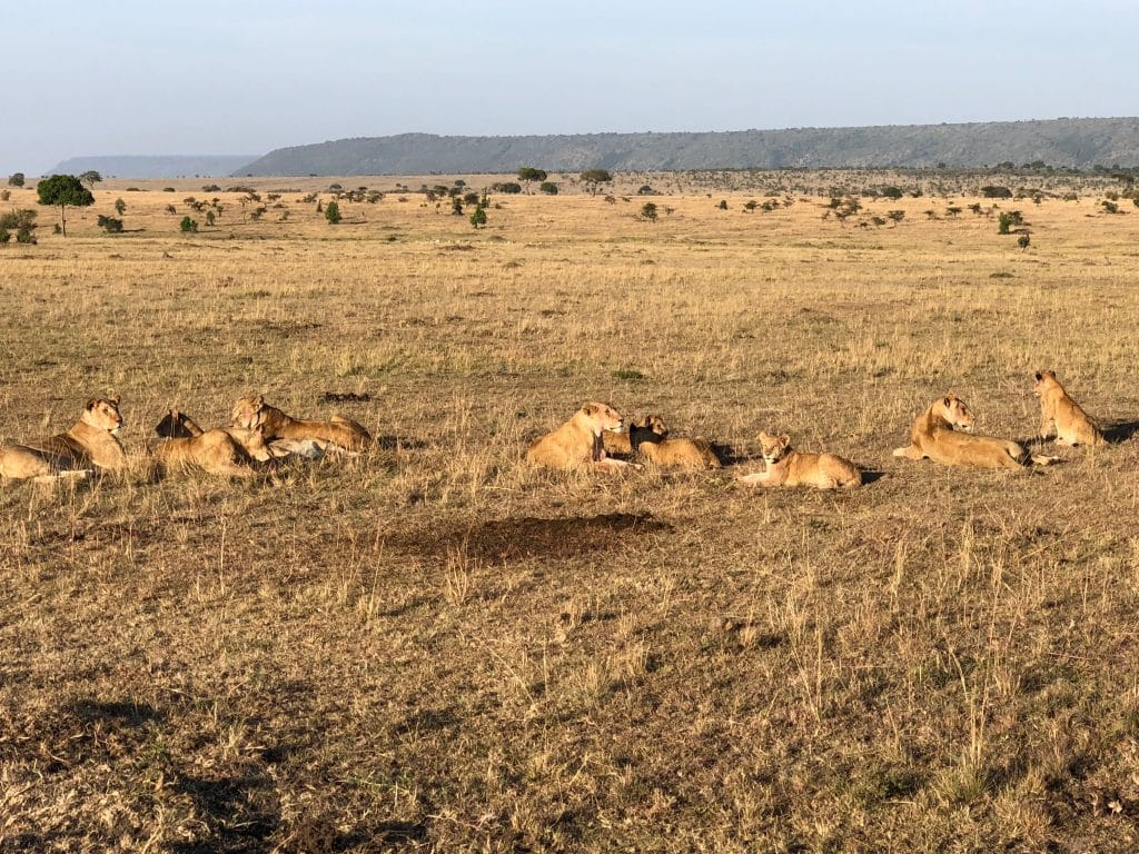 Just Checked Out: Elephant Pepper Camp, Masai Mara Kenya