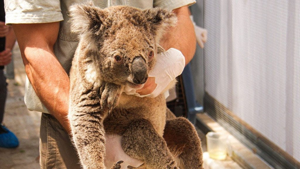 Australia On Fire: How To Help The Wildfire Victims