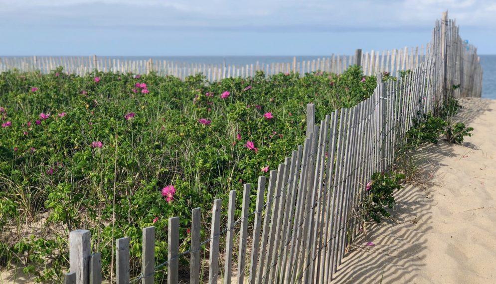 Sconset-beaches